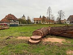 """Offene Petition für eine """"Steinfurter Baumschutzsatzung"""""""