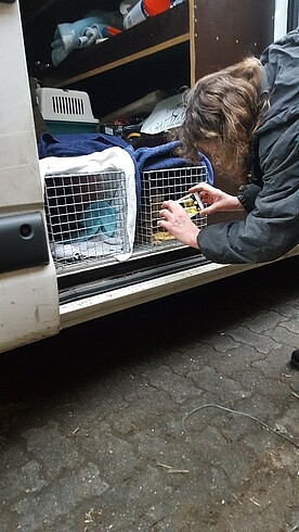 Ehrenamtliche retten Katzen – GAL & Bündnis 90/Die Grünen unterstützen Katzenhilfe