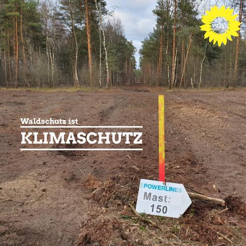 Bündnisgrüne beteiligen sich am Waldschutzbündnis gegen die Zerstörung der Metelener Heide